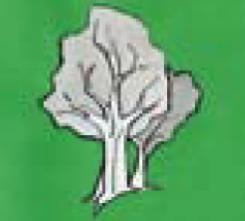 Pflanzentherapie (Phytotherapie)